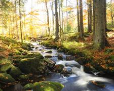 Freizeiterlebnis Bayerischer Wald